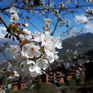 Montecampione primavera